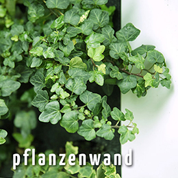vertical green – pflanzenwand